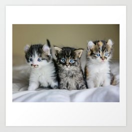 Cats Make Me Happy So Much Art Print