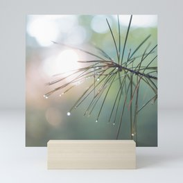 The Scent of Pine in the Morning - Nature Photography Mini Art Print