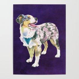 Toy Australian Shepherd Poster