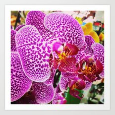 Orderly Orchids Art Print