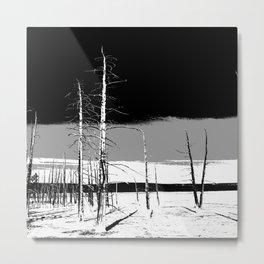 Lodgepole Pines Metal Print