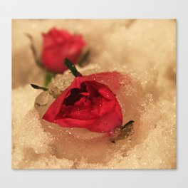 Frozen roses in the snow Canvas Print