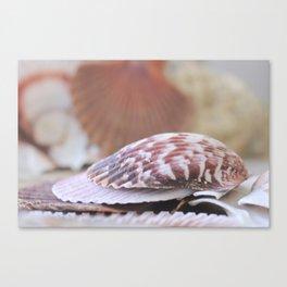 Seashell Collection Still Life Photograph Canvas Print