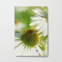 Rudbeckia white 065 Metal Print