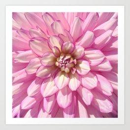 Pink Dalia Art Print
