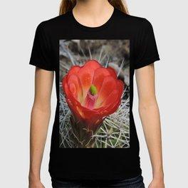 Red Blossom on a Hedgehog Cactus T-shirt