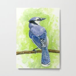 Blue jay watercolor Metal Print