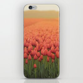 Tulips field 11 iPhone Skin