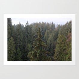 High trees Art Print