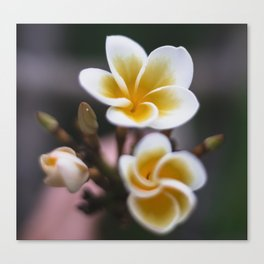 Vintage twist on simple tree flowers Canvas Print