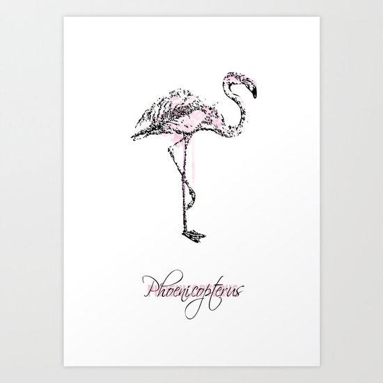 phoenicopterus Art Print