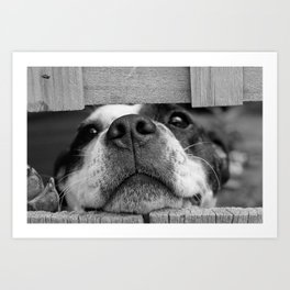 DOGGY Art Print