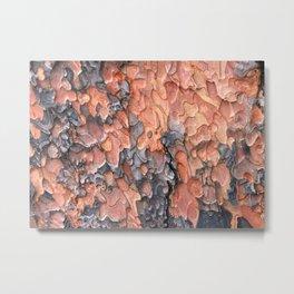 Close up texture of Ponderosa Pine Tree bark peeling Metal Print