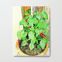 Plant of the red sweet pepper Metal Print