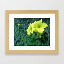 Singing in Yellow Framed Art Print