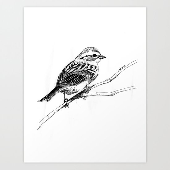 Chipping Sparrow Art Print