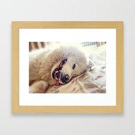 Playful One Framed Art Print