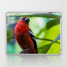 Sephanoides Fernandensis Laptop & iPad Skin