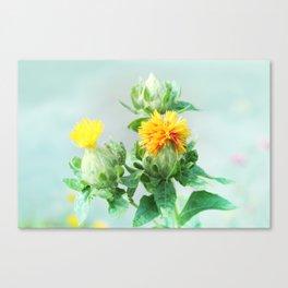 Yellow Safflower (Carthamus Tinctorius Yellow)  Canvas Print