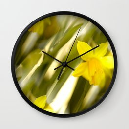Spring atmosphere with yellow narcissus Wall Clock