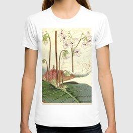 Streptocarpus saundersii 'Cape primrose' 1861 T-shirt
