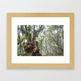 Centenary Tree. Garajonay. Foggy Forest Framed Art Print