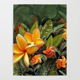 Hawaiian Plumeria at First Light Poster