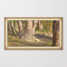 Long Shadows in an Enchanted Madrona Forest Canvas Print