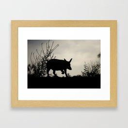 Wild Iberian Pig Framed Art Print