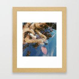 coi pond Framed Art Print