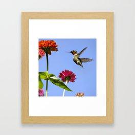Hummingbird Happiness Framed Art Print