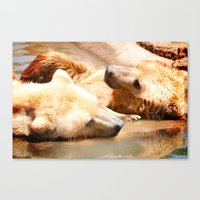 bears Canvas Prints featuring Bears by Sylvia C