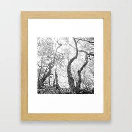 Cedro Forest. Dream Woods. Bw Framed Art Print