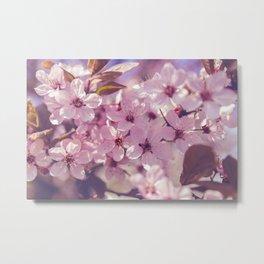 Sakura photography, pink blossoms Metal Print