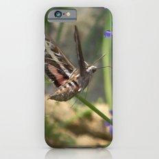 Hummingbird Moth Slim Case iPhone 6s
