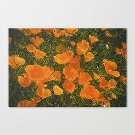 California Poppies 002 Canvas Print