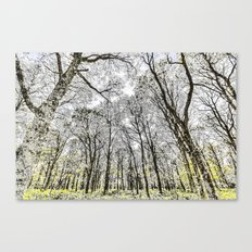 The snowy Forest Canvas Print
