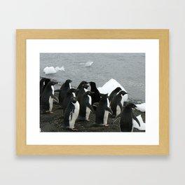 Adelie Penguins 3, Antarctica 2006 Framed Art Print