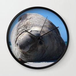 Southern Elephant Seal Wall Clock