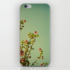 Vintage ribes plant iPhone & iPod Skin