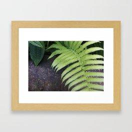 Ferns of Strength in Hawaii Framed Art Print