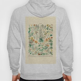Floral Diagram // Fleurs IV by Adolphe Millot 19th Century French Science Textbook Artwork Hoody