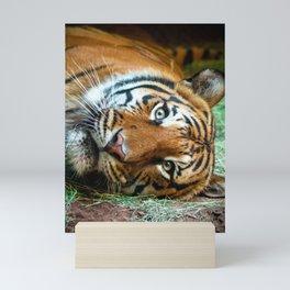 eye of the tiger Mini Art Print