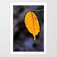 Orange Leaf Art Print