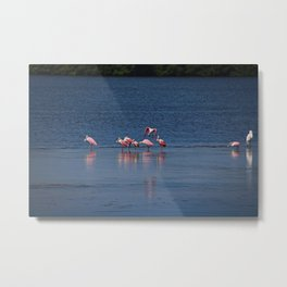 The Spoonbill Legend Lingers I Metal Print