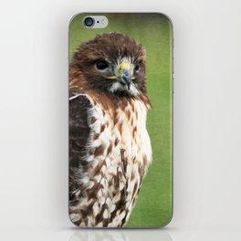 Red-tailed Hawk III iPhone Skin