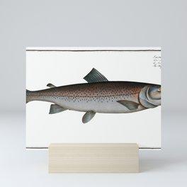 Schifermiller's Salmon (Salmo Schifermulleri) from Ichtylogie, or Natural History General and Partic Mini Art Print