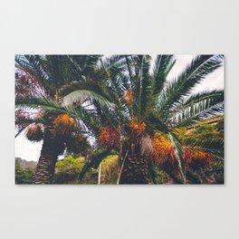 Excotic plants Canvas Print