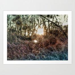 Burdock Art Print