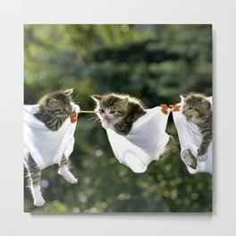 Kittens in underwear on clothesline Metal Print
